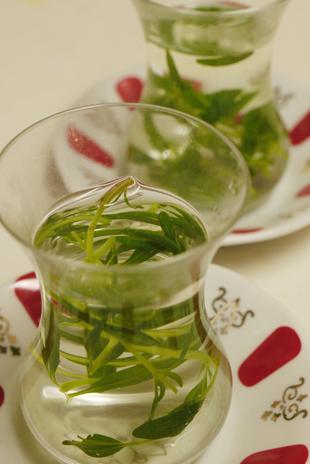 _1100851hyssop tea.jpg